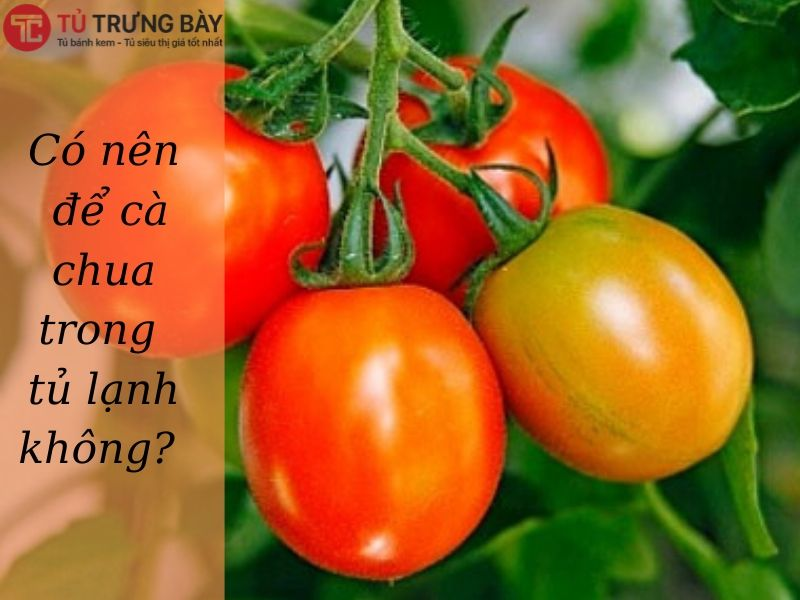 khong nen bao quan ca chua trong tu lanh